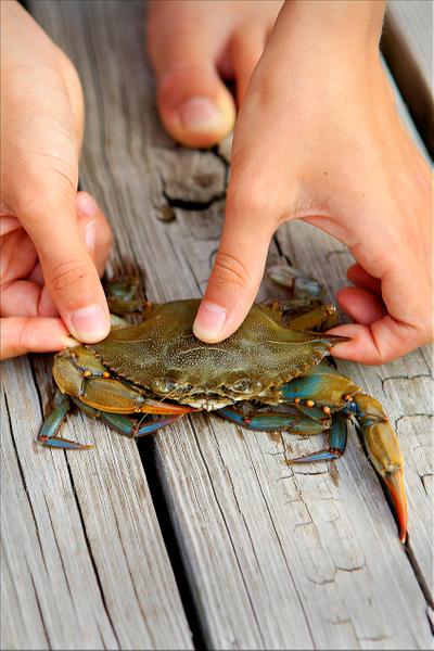 crab-under-thimb-copy.jpg