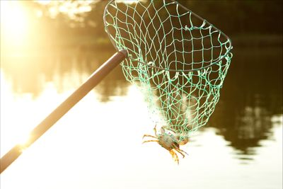 crab-in-net.jpg