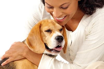 Beagle-on-white-final-copy.jpg