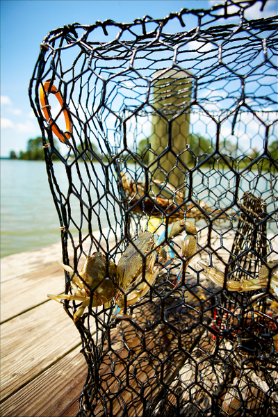 crabs-in-cages.jpg