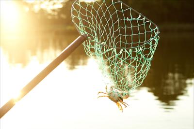 crab-in-net.jpg