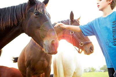 1mason_petting_horse__copy