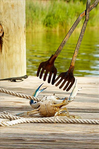 crab-fighting-.jpg