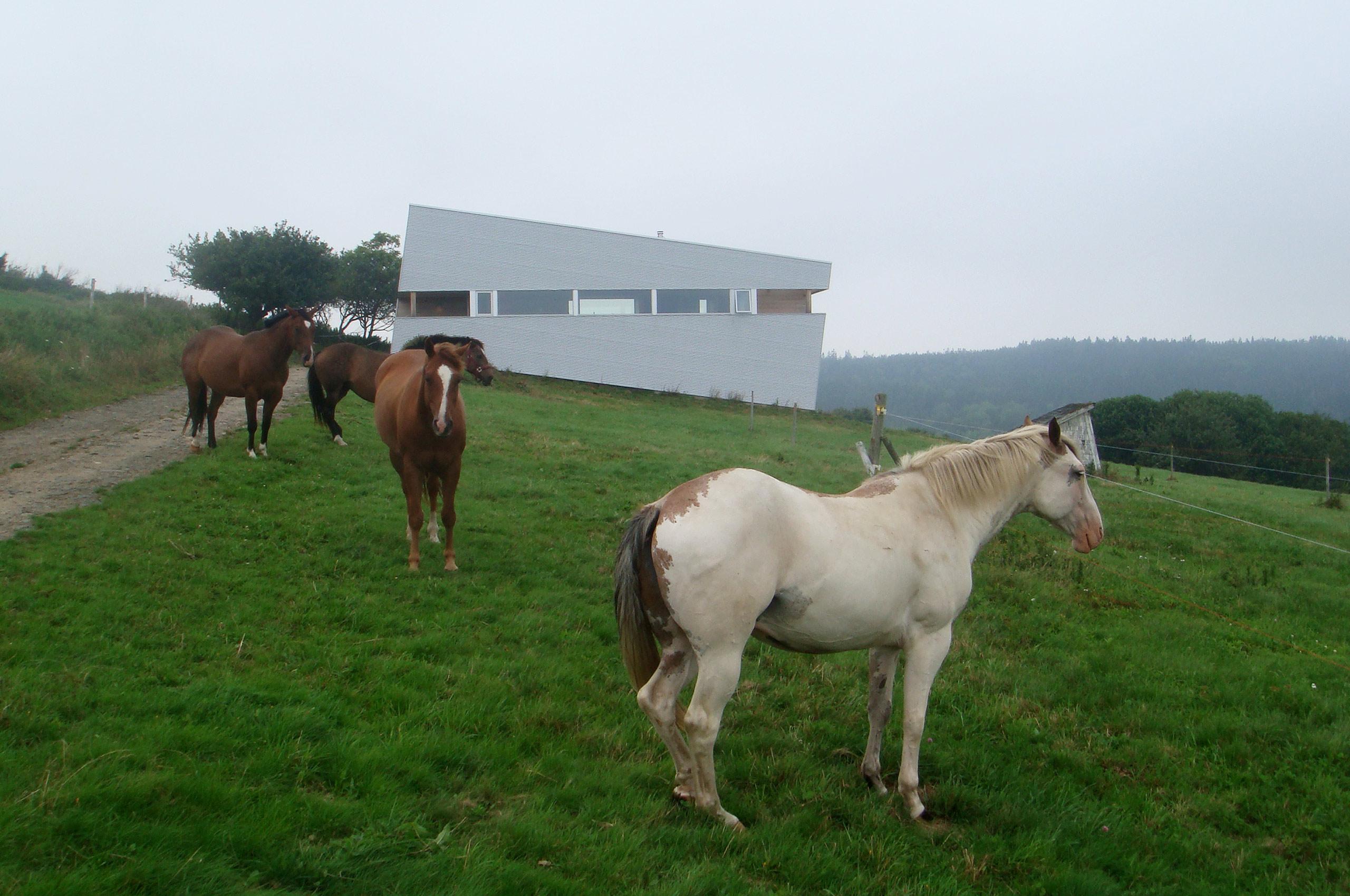 02_horses_2560x1700_66quality.jpg