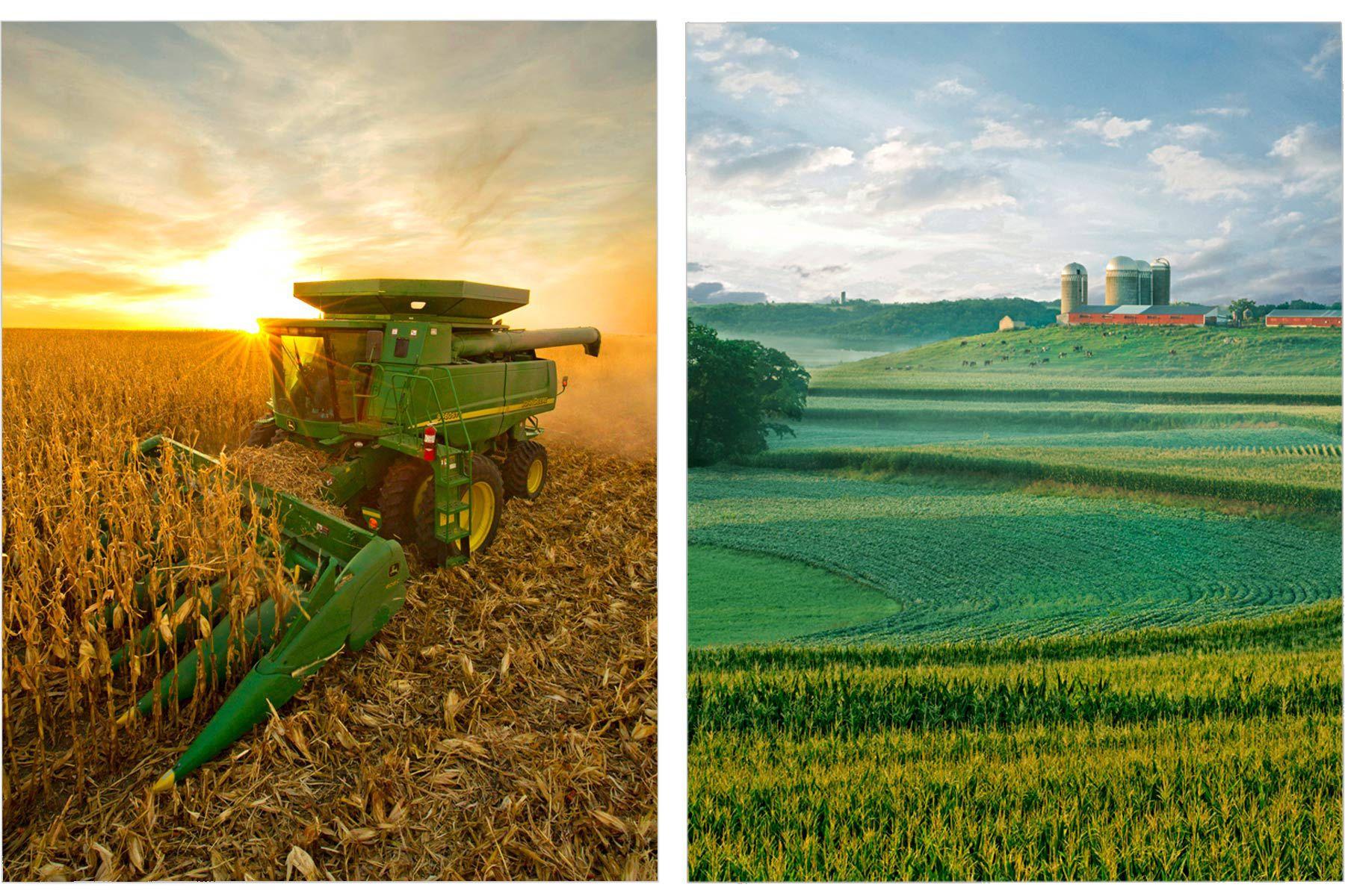 Fall Evening Harvest / Summer Fields of Green