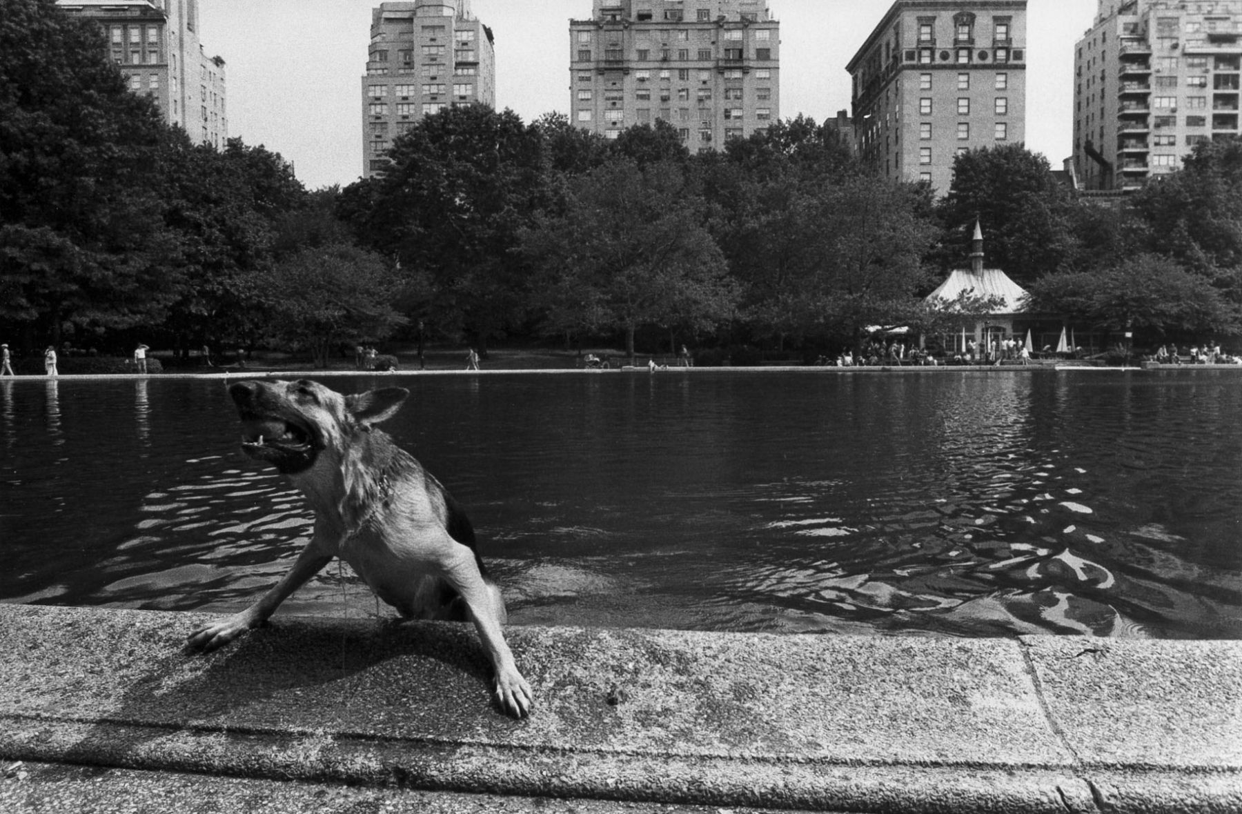 Dog, Central Park, NYC; 1978