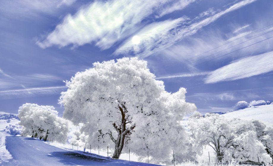 1DSC_0018color.jpg