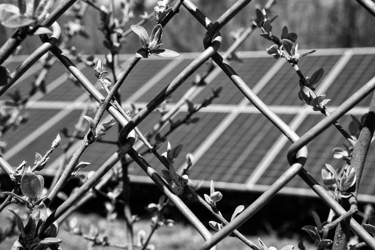 Littleton Solar Farm - 4-30-20 - 0558-Edit-4.jpg