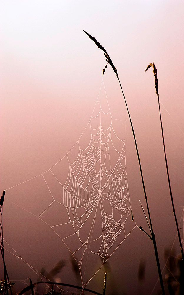 Vermont - Spider Web and Reeds-warmed-web res JPG1000-7445-1.jpg
