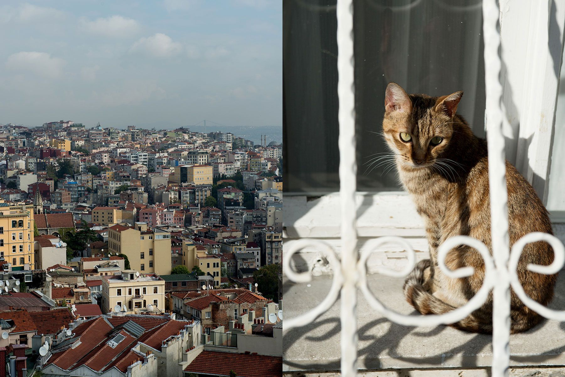 1istanbul_city_and_cat.jpg