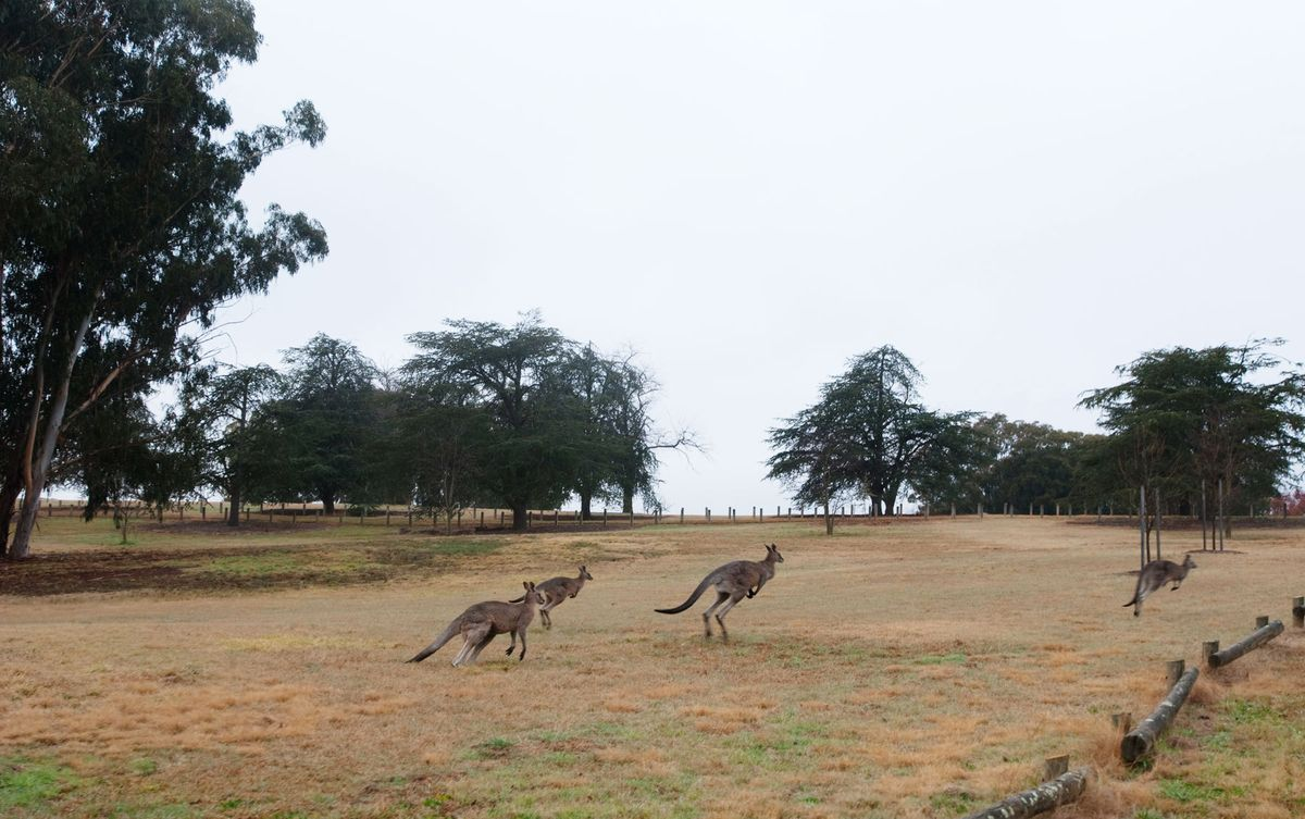 Flight of the Kangaroos