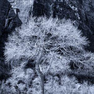 Zion Solo Tree