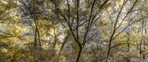 Drone in the trees #1.jpg