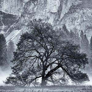 Yosemite Meadow Morning Mist