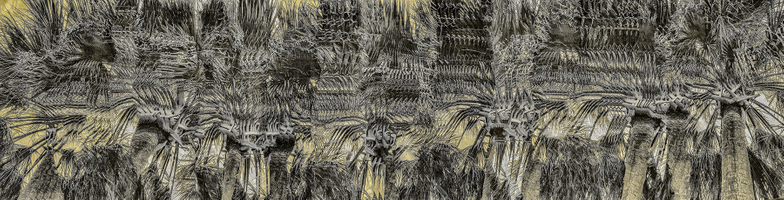 Palm Mystery #2