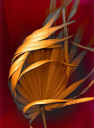 On Golden Fronds