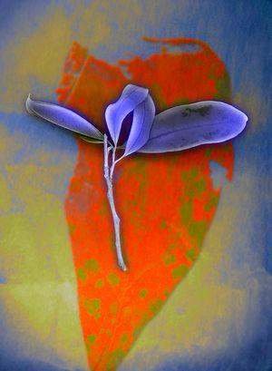 Red leaf, blue leaf