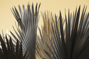 Wing of Fronds