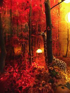 A Colorful Dream Exhibition Installation