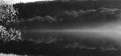 AM Reflection