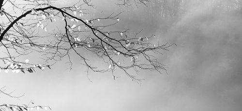 Tree Calligraphy