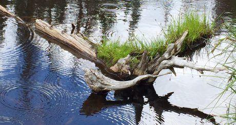 lake irene, co