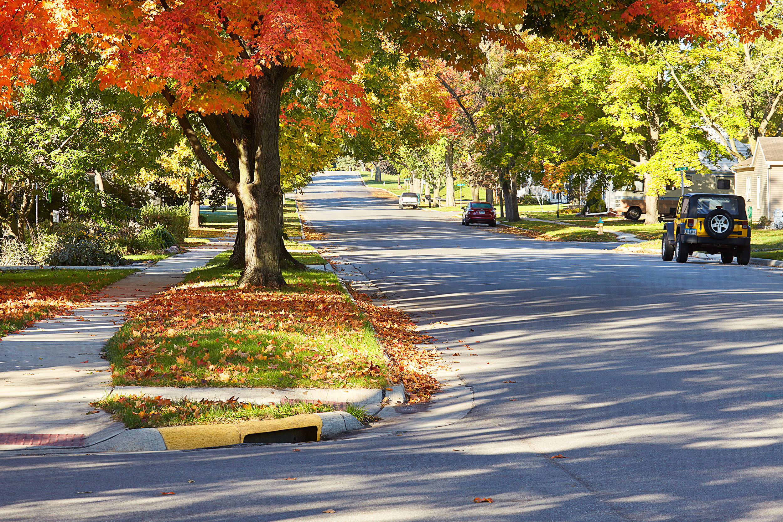 Street with fall leaves on the trees