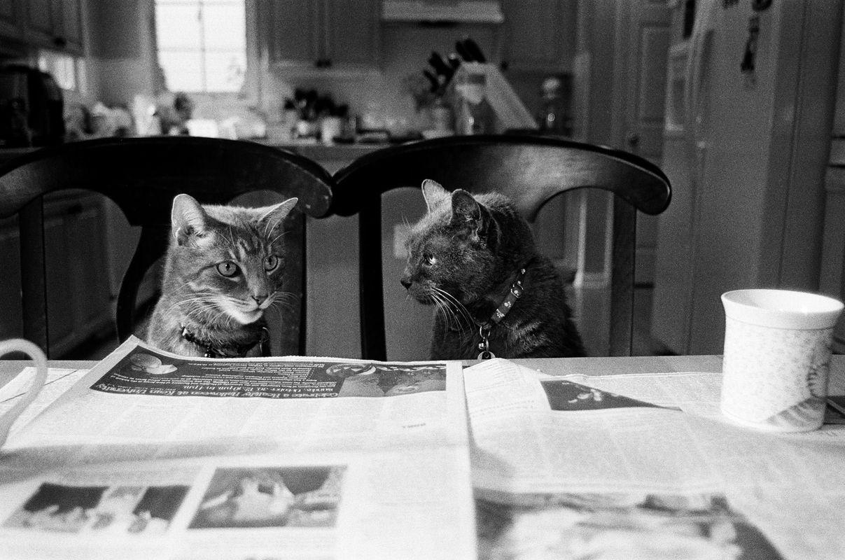 1twocats_kitchentable