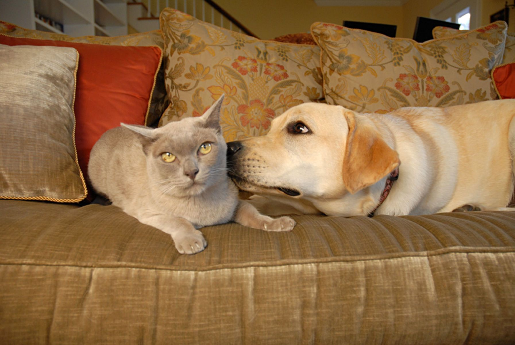 1cat_yellowlab147