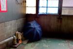 1r10_cornerumbrella.jpg