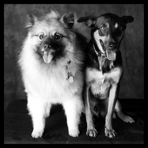 1davidson_twodogs_web.jpg