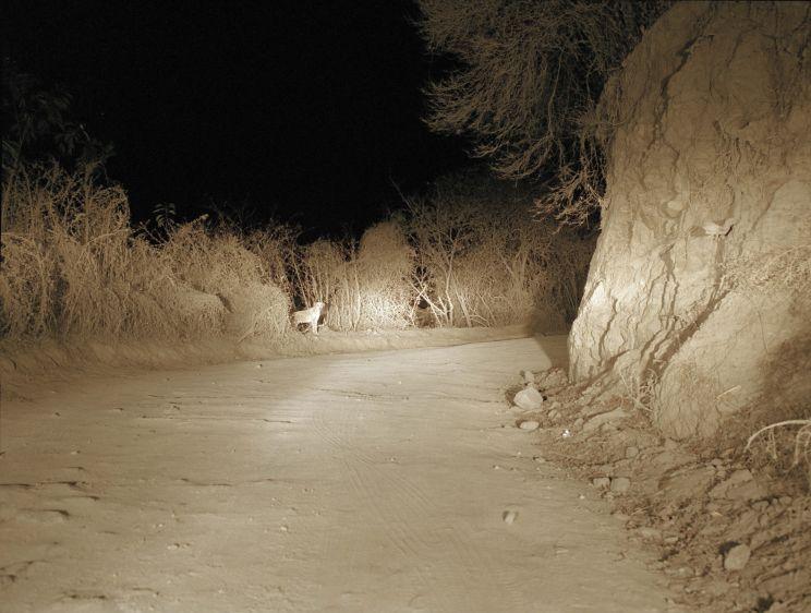 021709093156_1mexico_night_road_1_1.jpg