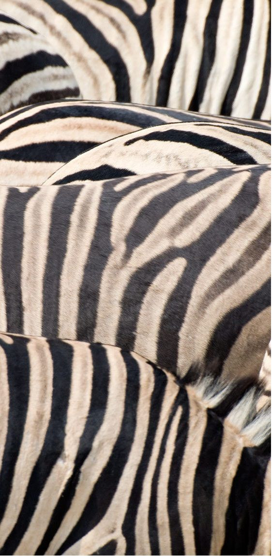 1zebra_stripes_h_rtp