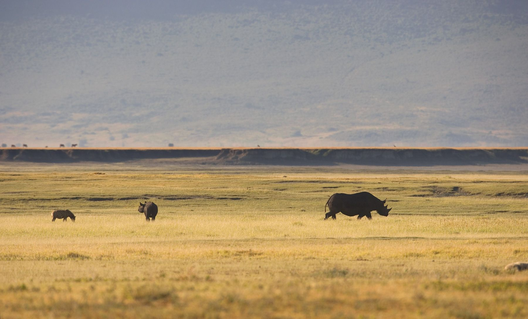 1hyena_and_rhino