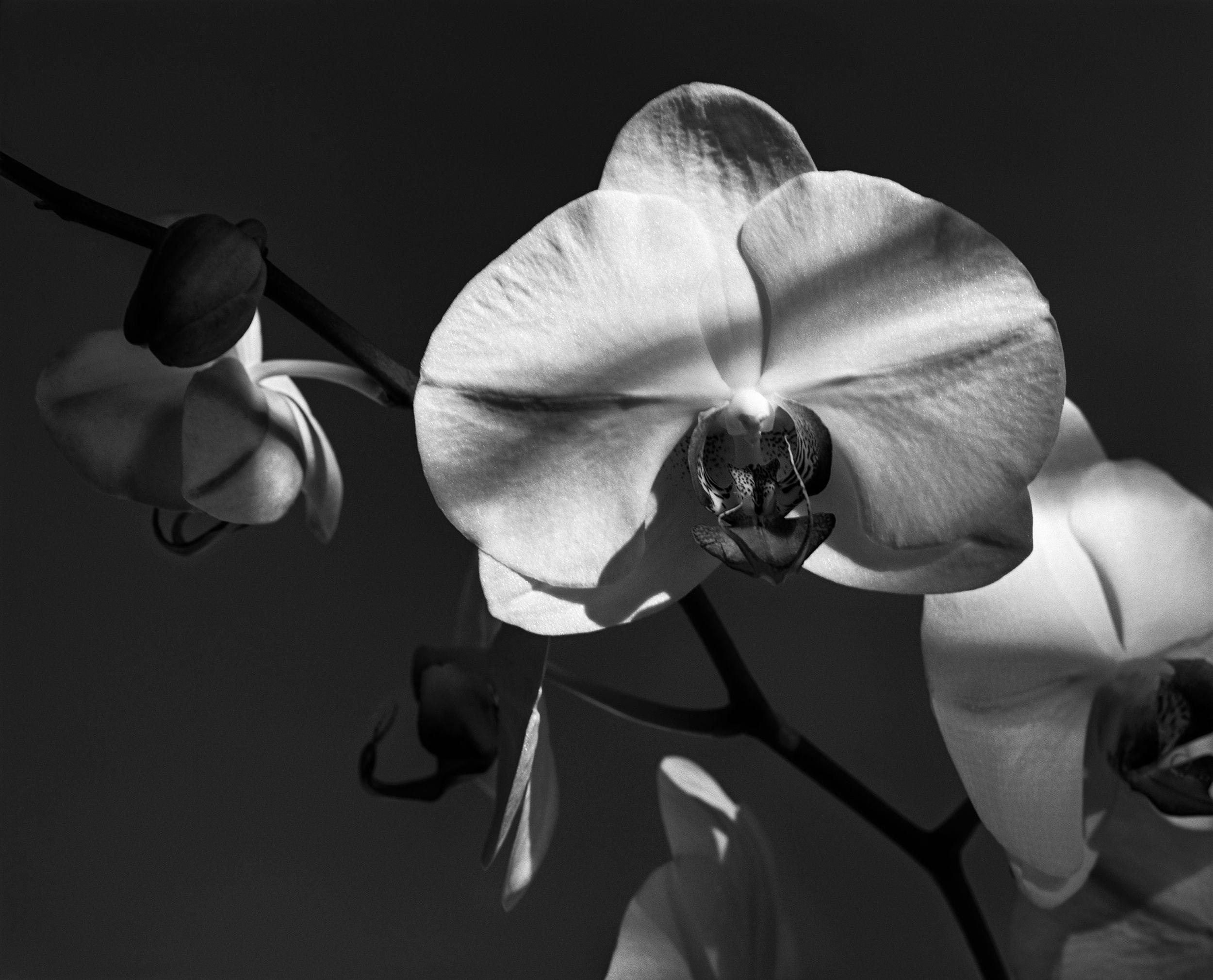 JK_Orchid_FR12_2_F3_flat_f3_Small2.jpg