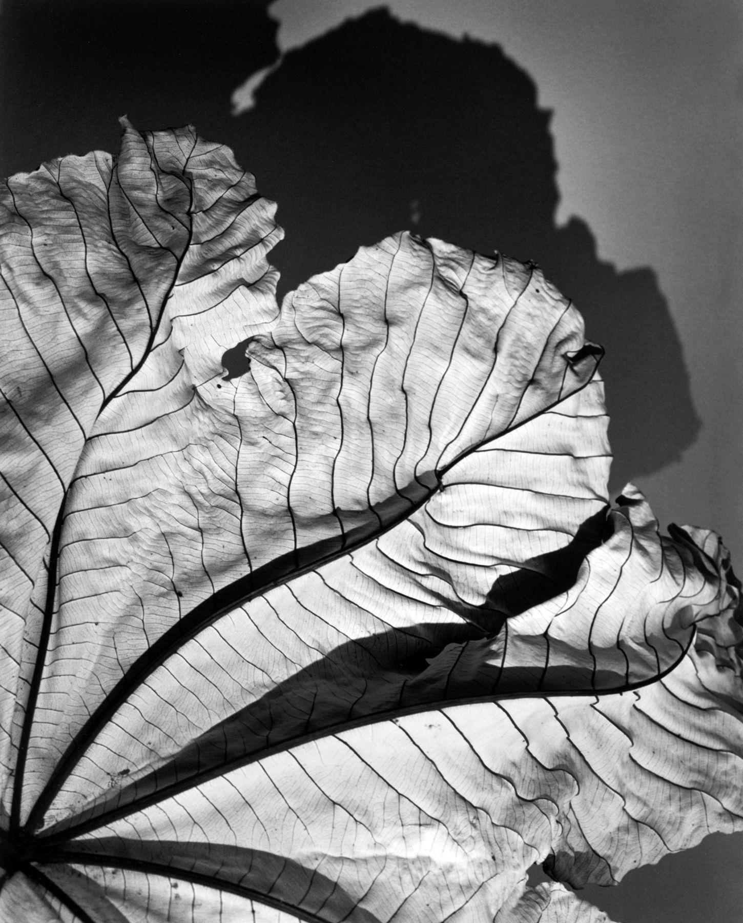 leaf karotkin_jean_06a.jpg