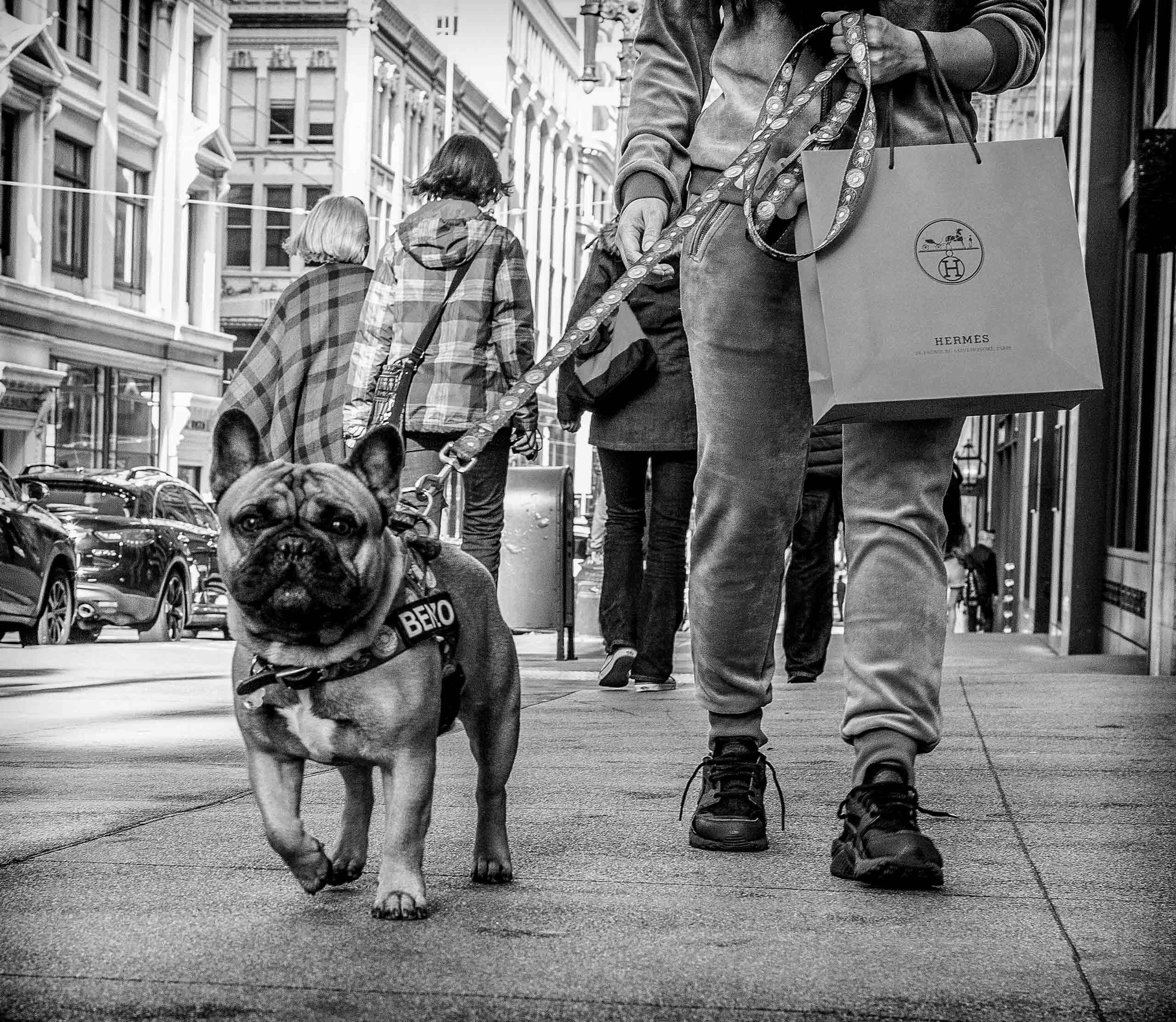 20170406-_Bull_Dog.jpg