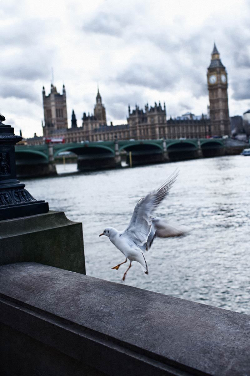 Dove by the Thames, London.