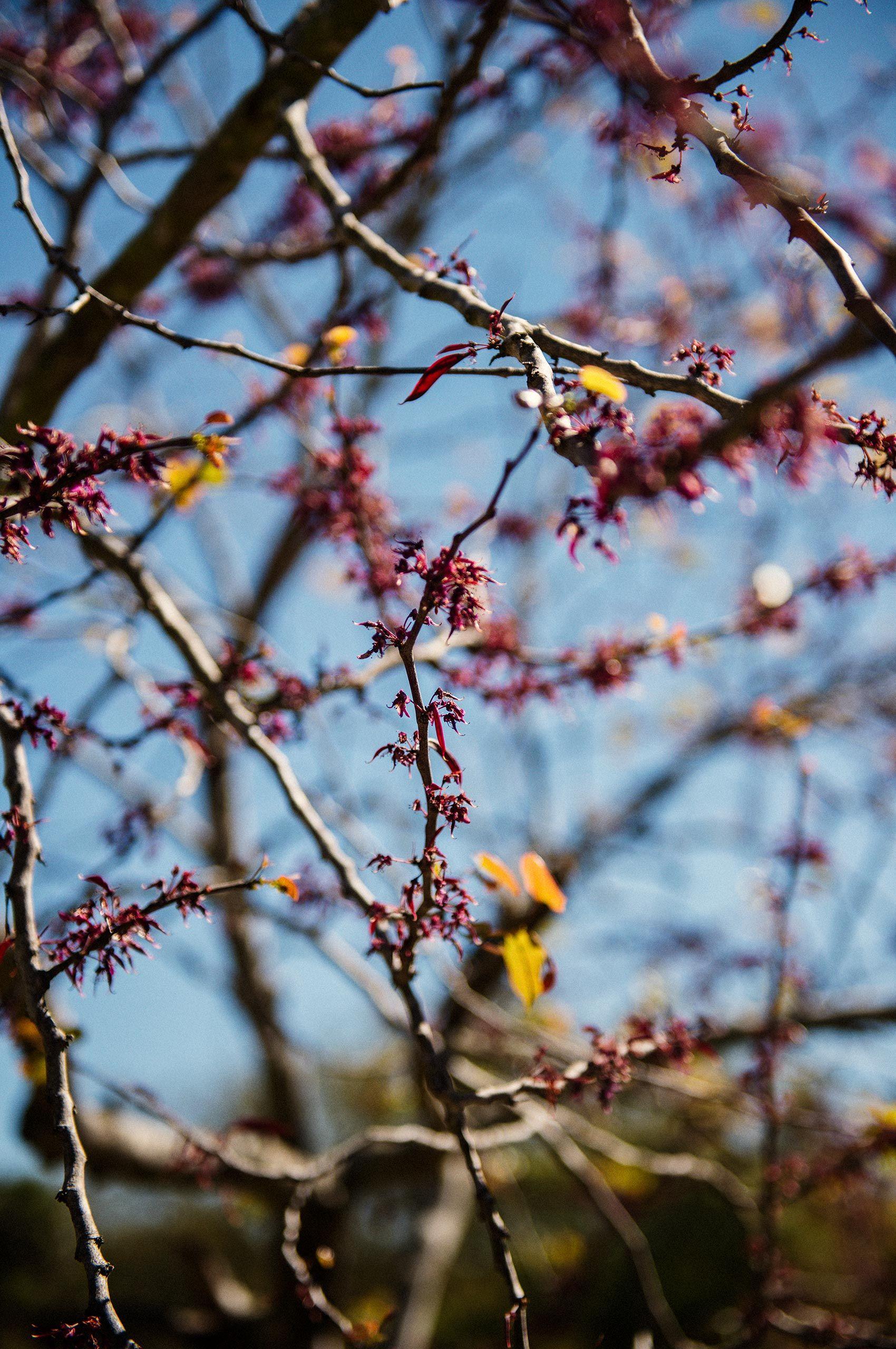 Spring-buds-HenrikOlundPhotography.jpg