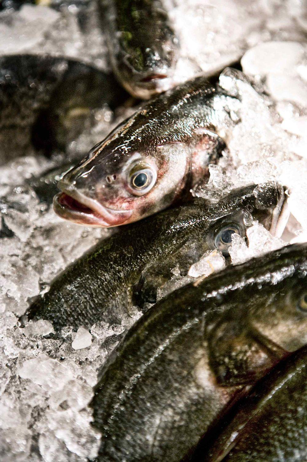 Fish-StillLife-RealLife-color-by-HenrikOlundPhotography.jpg