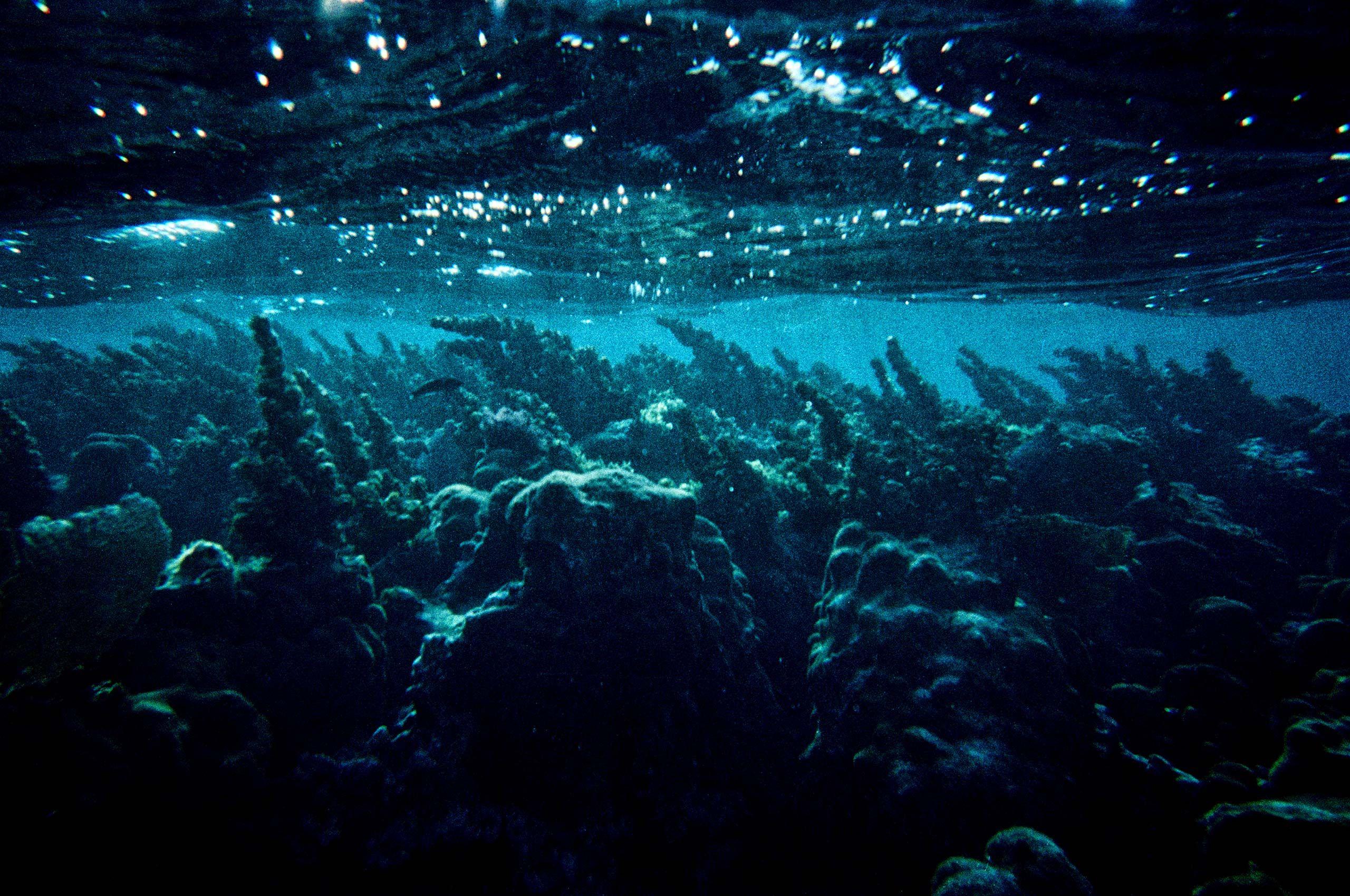 UnderwaterBigFujix_WEB.jpg