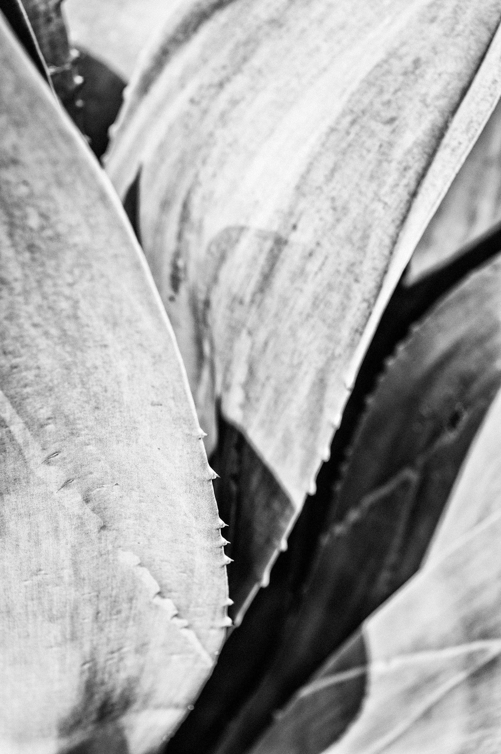 cactus-symmetry-HenrikOlundPhotography.jpg