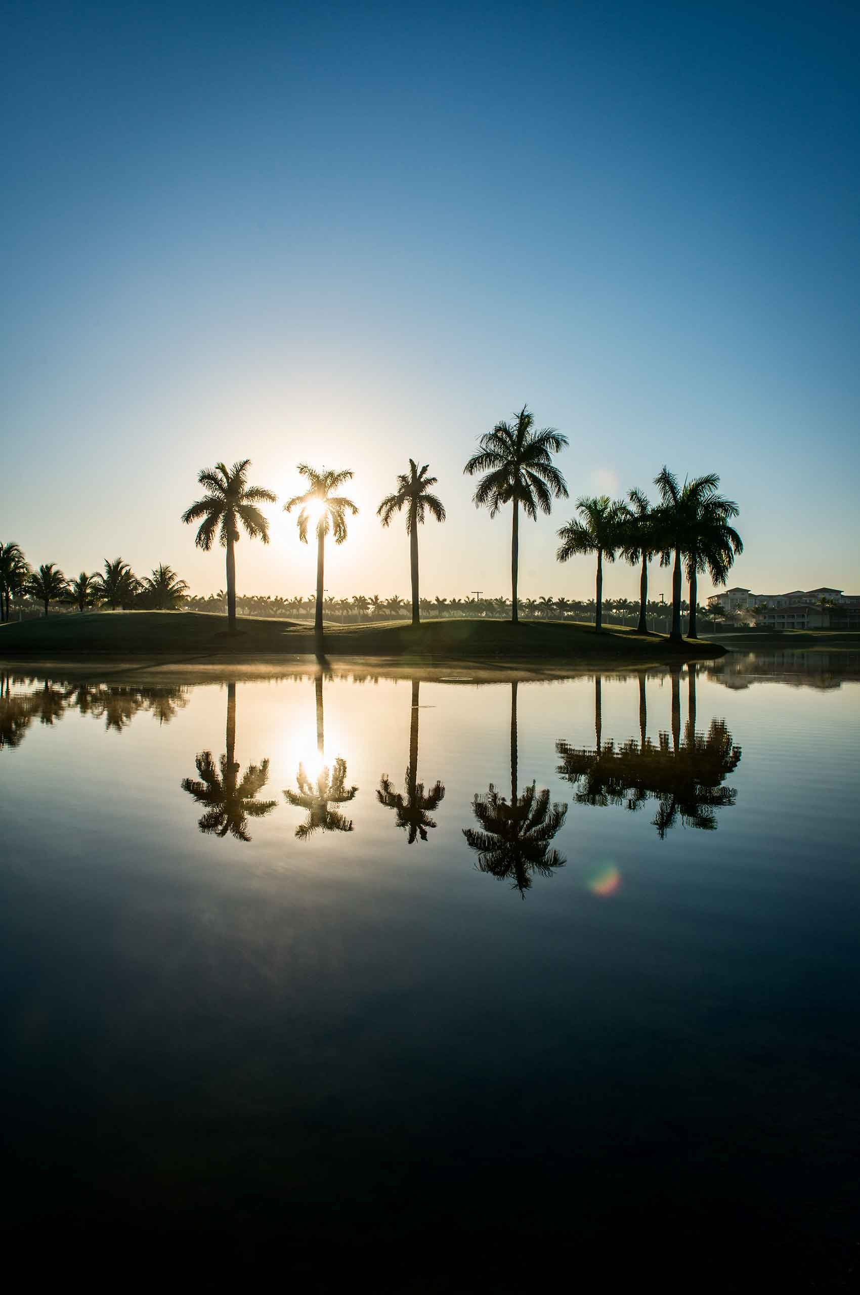 Palmtrees-reflection-in-water-by-HenrikOlundPhotography..jpg