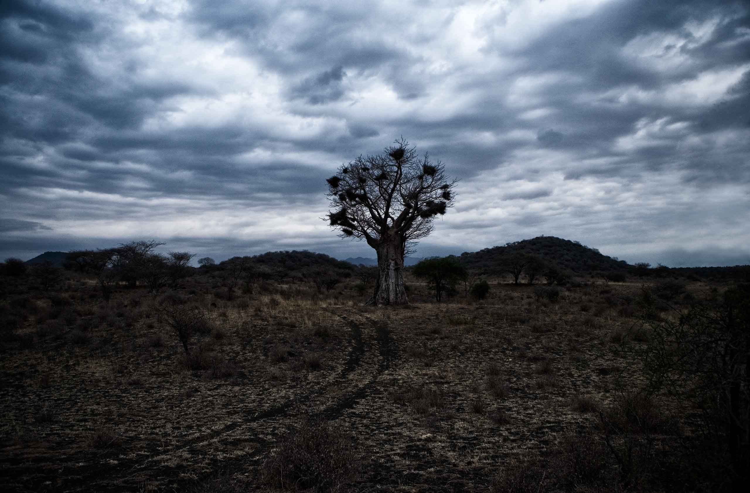 baobob-tree-kenya-by-henrikolundphotography.jpg