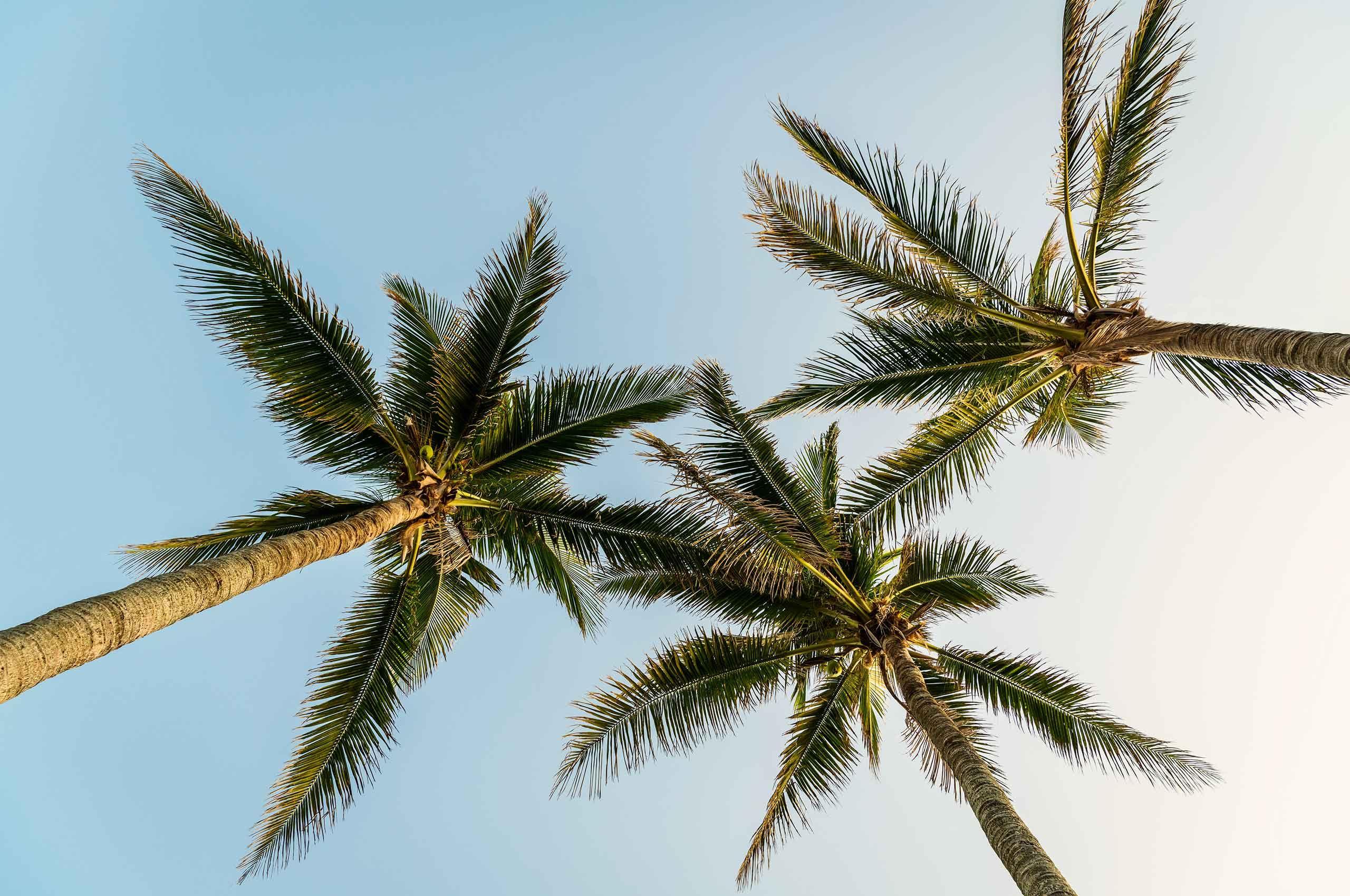 Palmtrees-against-sky-by-HenrikOlundPhotography.jpg