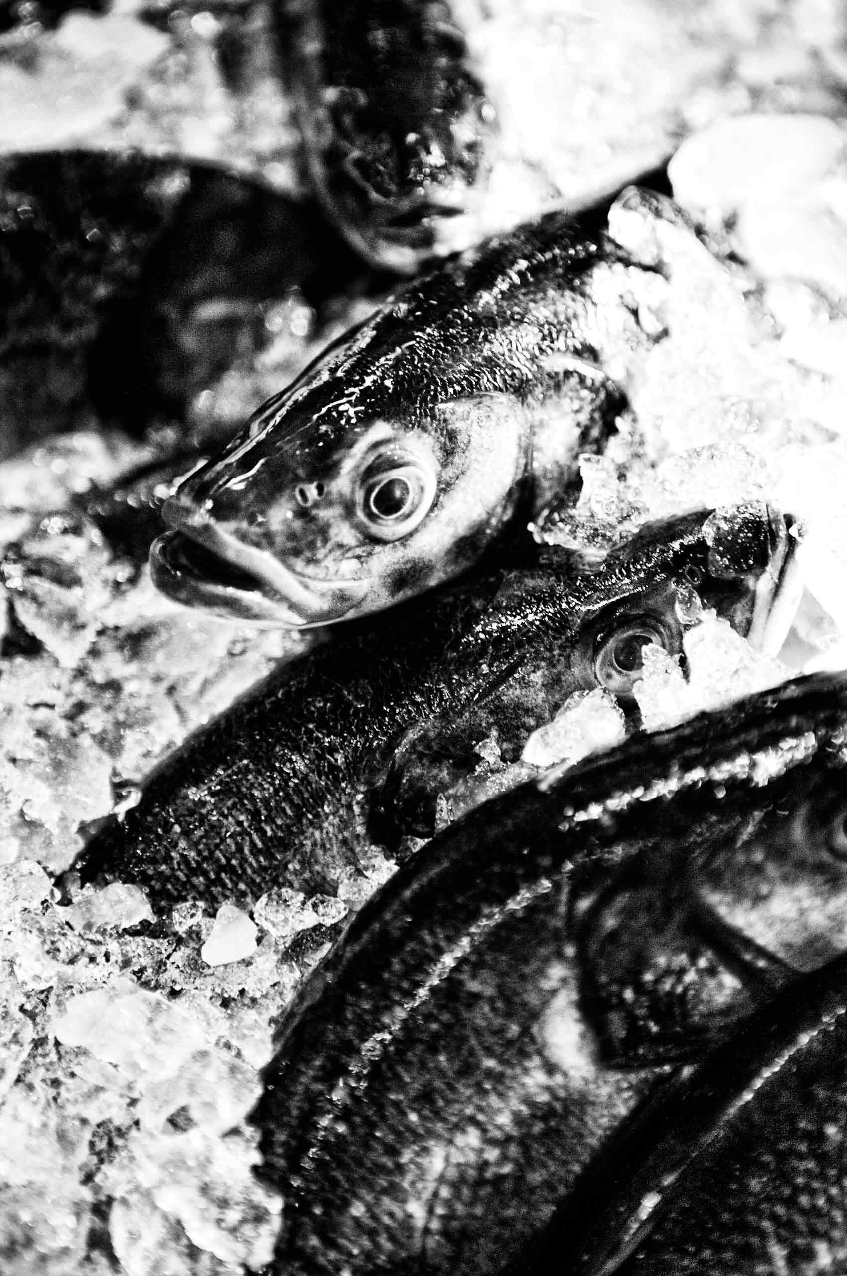 Fish-StillLife-RealLife-by-HenrikOlundPhotography.jpg