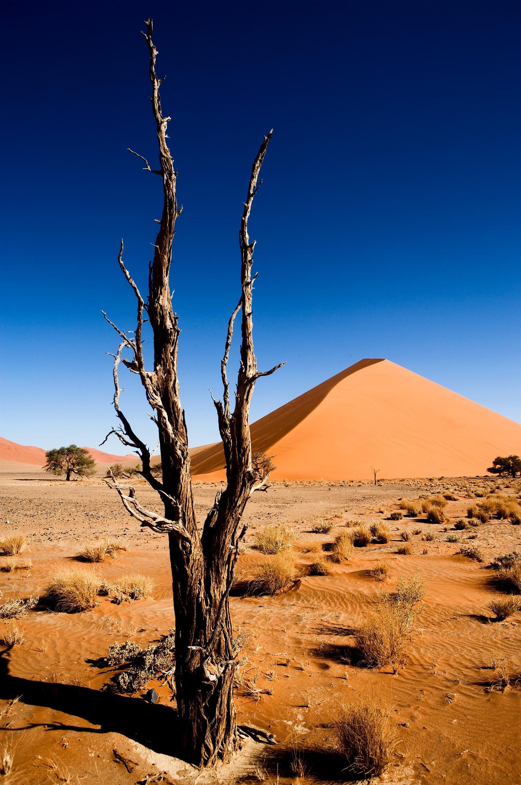sossusvlei-tree-namibia-HenrikOlundPhotography.jpg