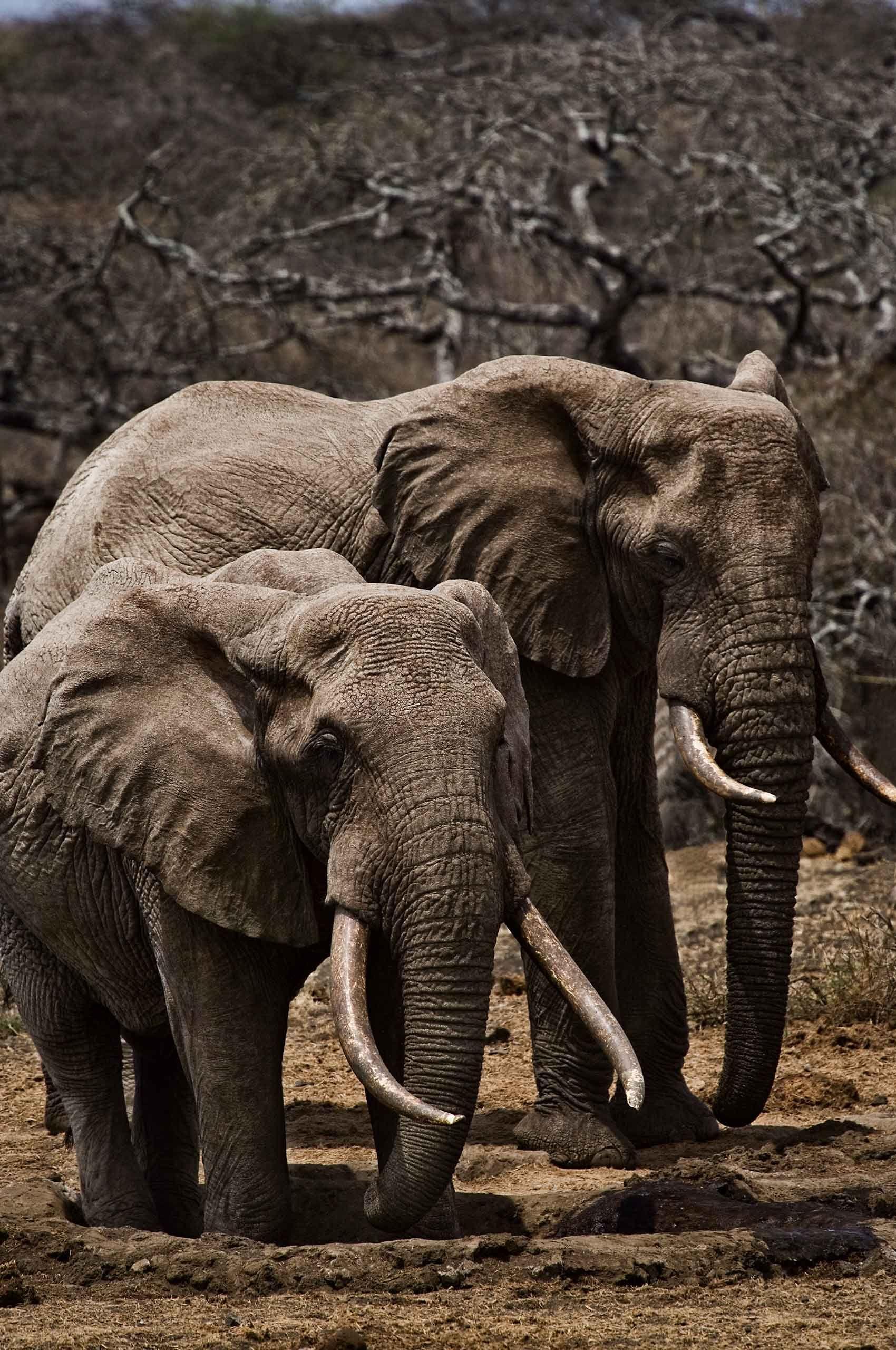elephants-kenya-by-henrikolundphotography.jpg