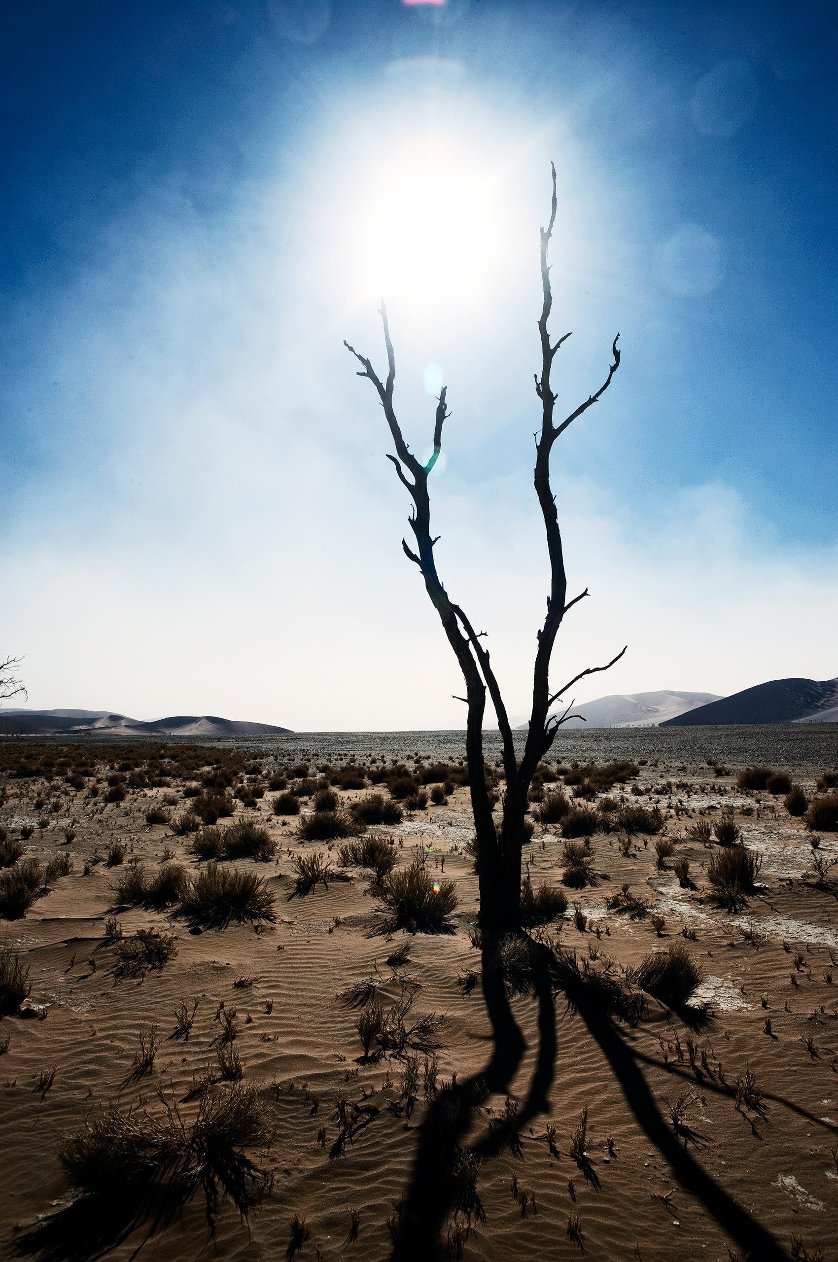deadvlei-tree-namibia-bHenrikOlundPhotography.jpg