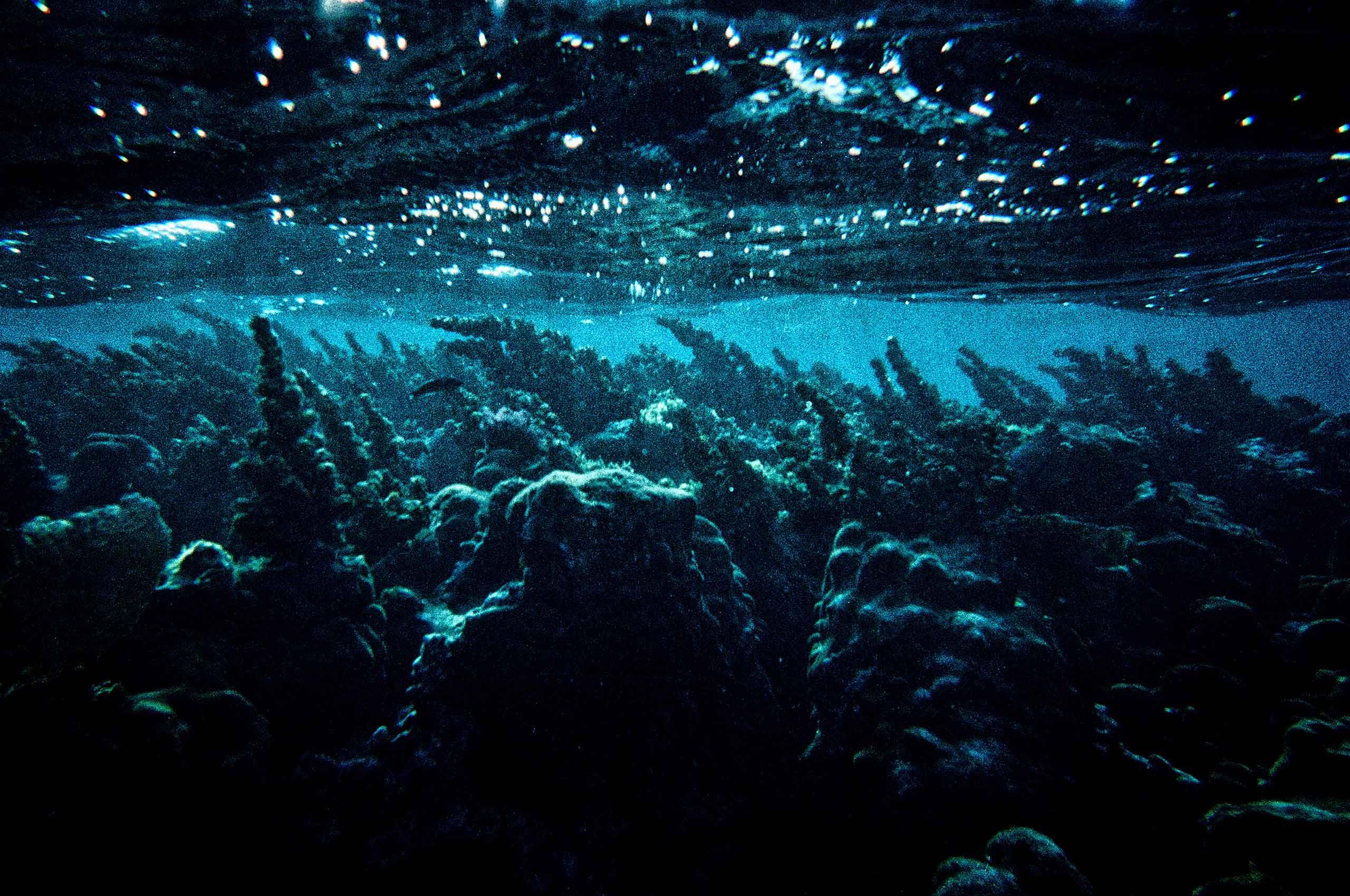 Underwater-Cenote-Mexico-by-HenrikOlundPhotography.jpg